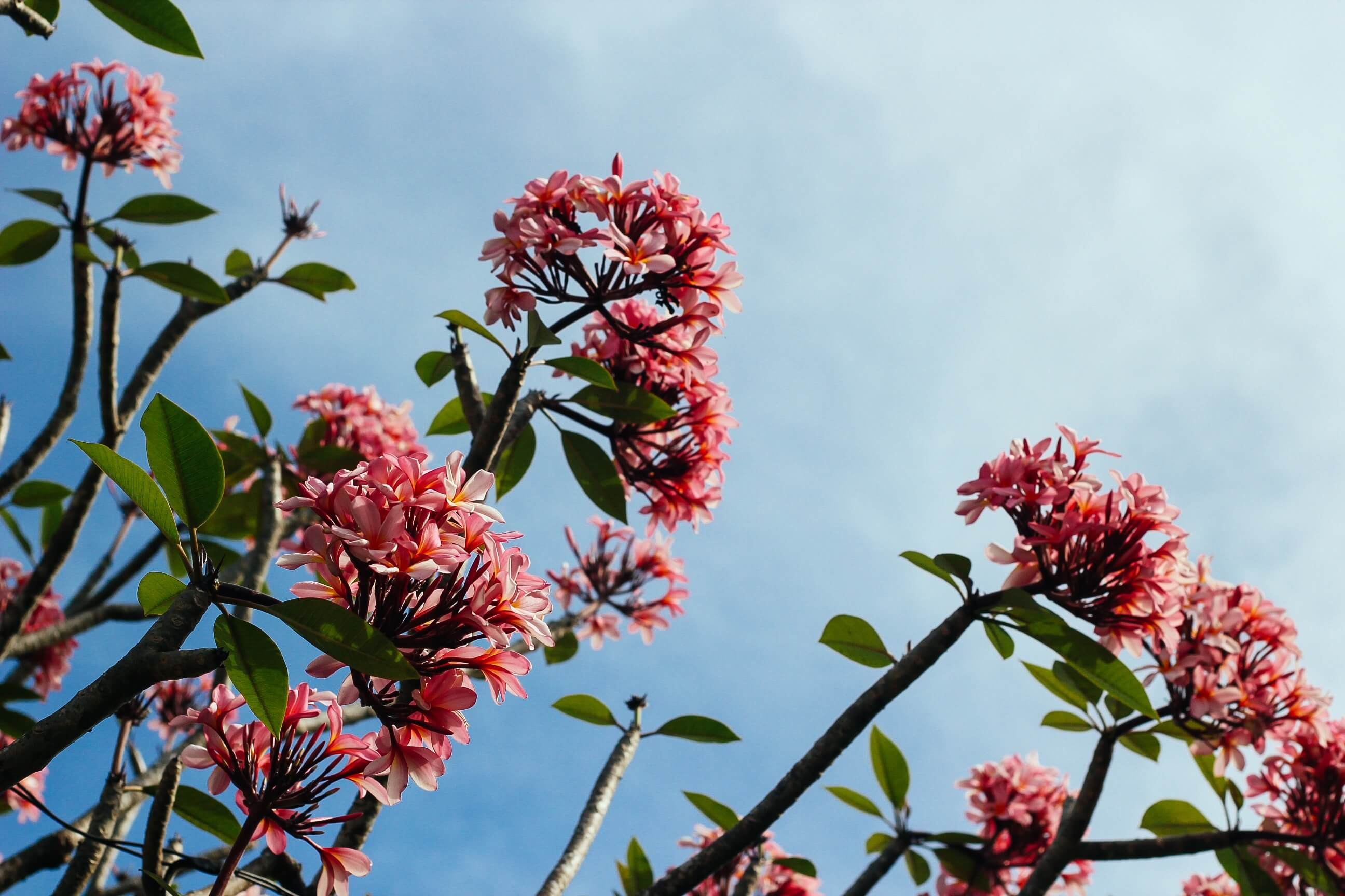 Why You Should Choose Green Carpet Cleaning