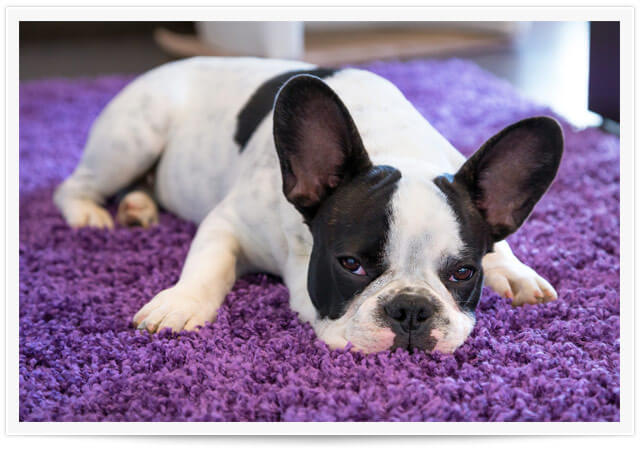 carpet pet urine removal sacramento ca