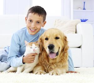 selecting the best carpets for kids and pets van 39 s chem dry. Black Bedroom Furniture Sets. Home Design Ideas