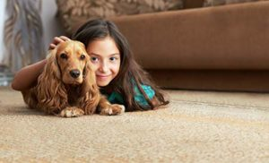 carpet cleaning wilton ca